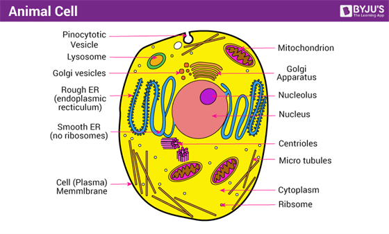 diagram of cell organelles pie diagram of cell organelles test