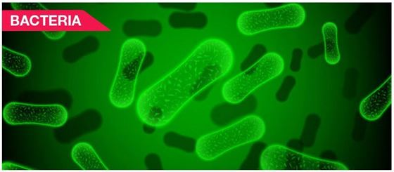 Bacteria - Structure, Classification, Reproduction, Benefits and more