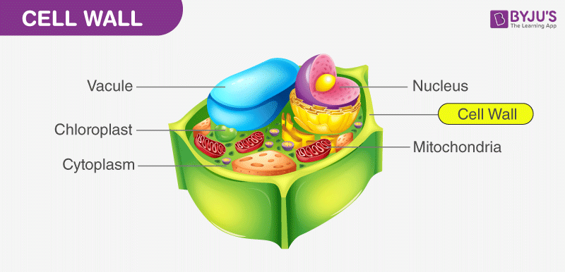 Cell and Cell Organelles