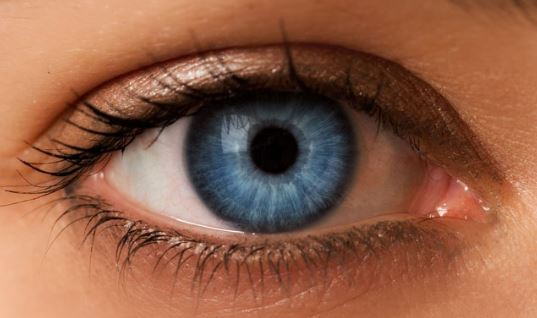 Blue Iris Caused by Tyndall Effect