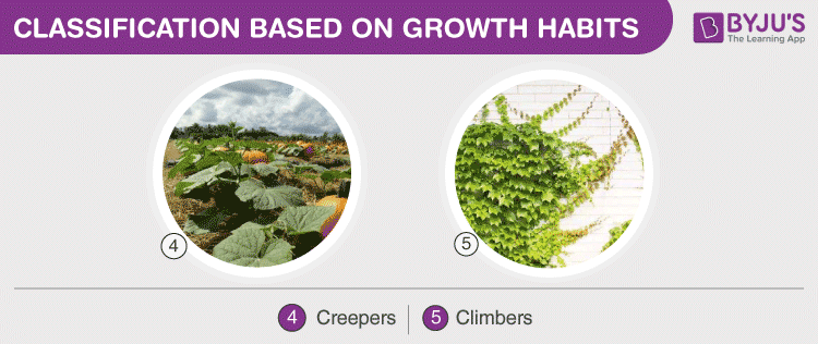Classification Based On Growth Habit