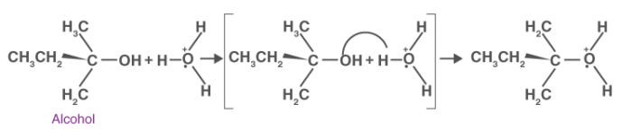 Formation of Protonated Alcohol