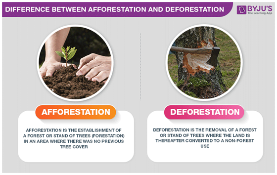 what are the difference between afforestation and deforestation?