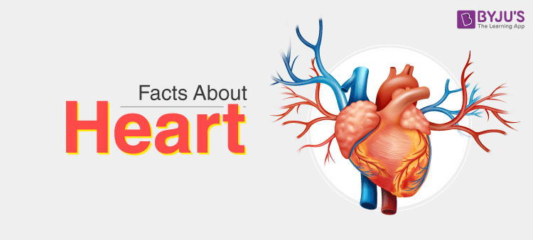 Facts about Human Heart