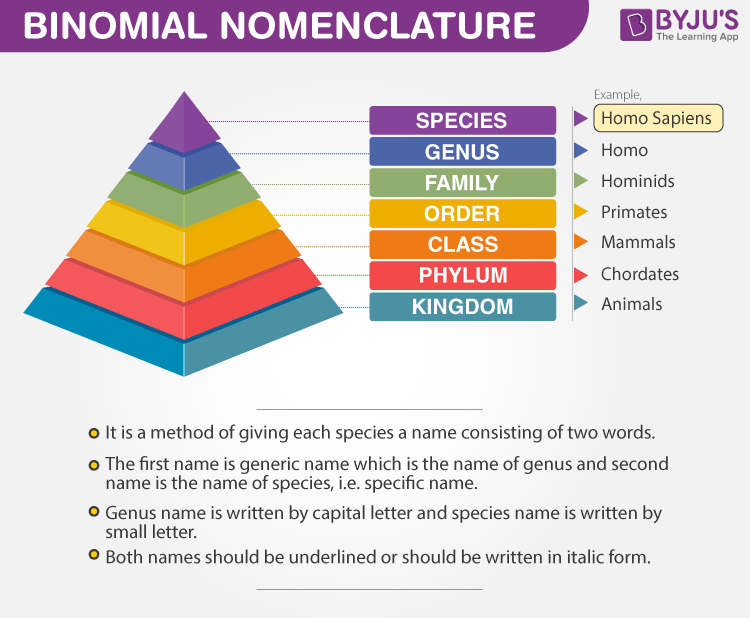Nomenclature and Biodiversity In the Living World