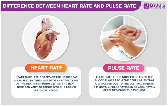 Difference Between Heart Rate and Pulse Rate