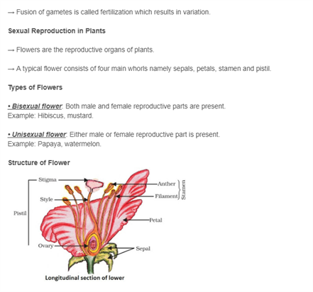 Class 10 Science Chapter 8 - How do Organisms Reproduce