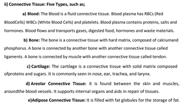 Class 9 Science Chapter 6 Tissues
