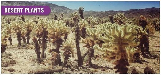 The spines on cacti help prevent excessive loss of water