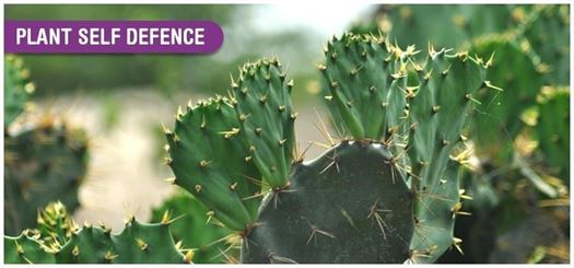 Some plants evolved spines and thorns, other evolved nasty chemicals that poison or leave a bad taste in the mouth.