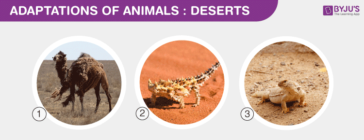Adaptations Deserts