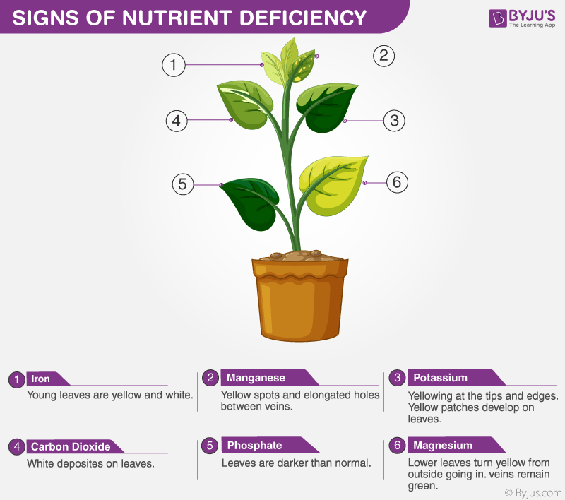 Deficiency Symptoms In Plants Types And Its Symptoms