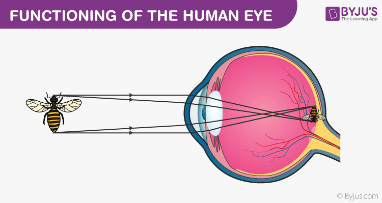 Functioning of the Human eye