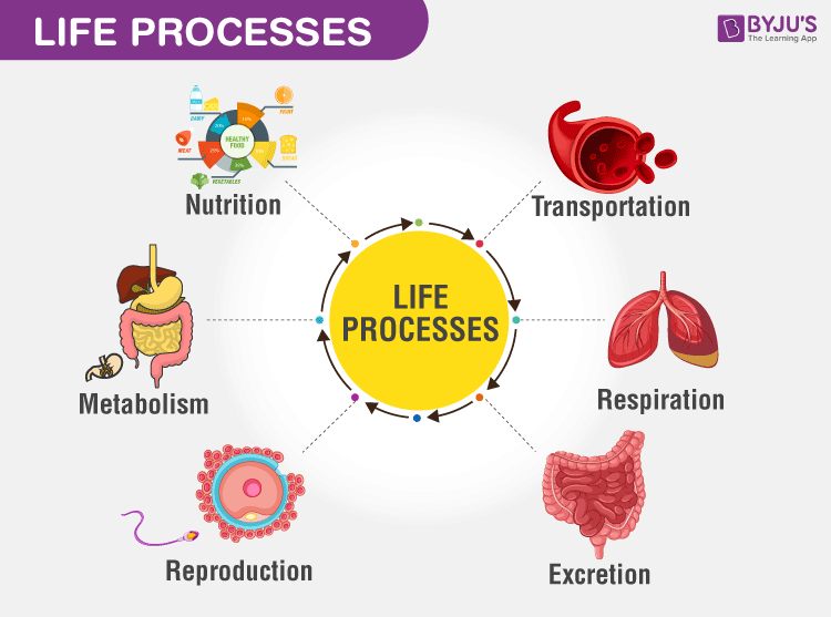 Life processes - Types of Life Processes