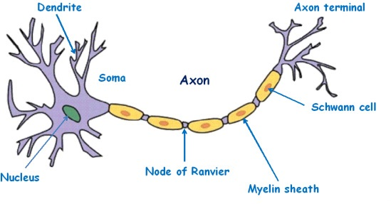 Image result for Importance of Diagrams in Biology