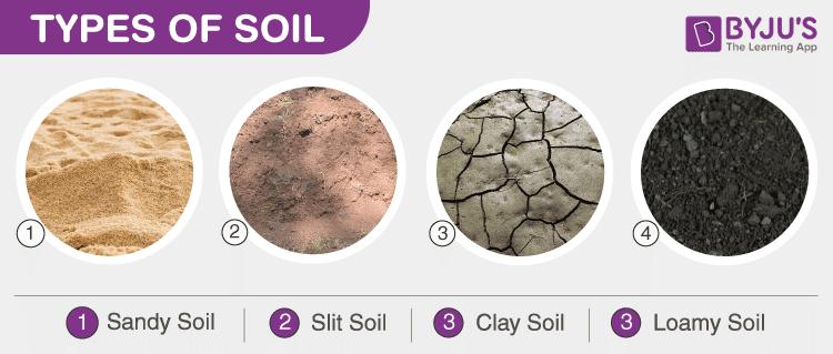 Types Of Soil - Sandy Soil, Clay Soil, Silt Soil, And Loamy Soil