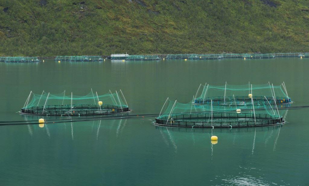Fish Production - Methods of Fish production for Economical Use