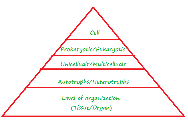 Hierarchy of Classification