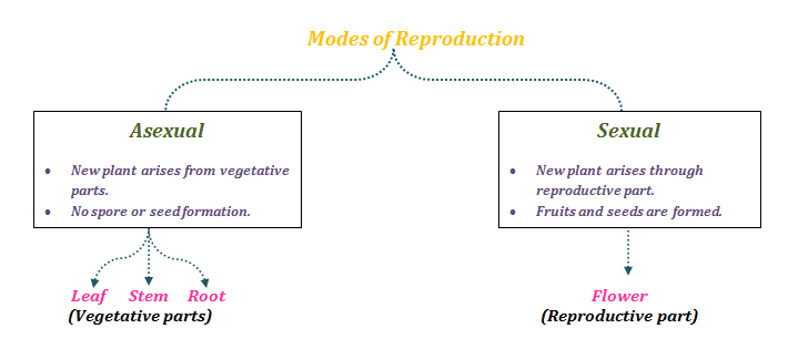 Modes of Reproduction in plants