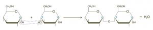 Glycosidic bond