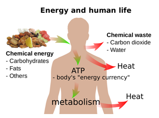 Concept of Metabolism