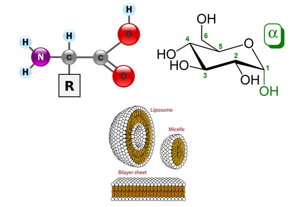 Biomacromolecules