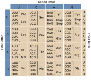 Genetic code- Codons for the Amino Acids