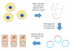 Tools of Recombinant DNA technology