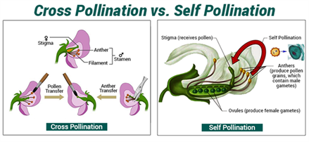 Cross Pollination and Self Pollination