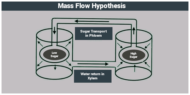 Mass Flow Hypothesis