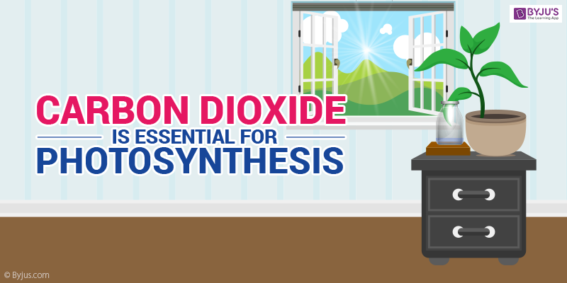 Experiments to prove carbon dioxide is essential for photosynthesis.