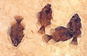 Animal Fossils
