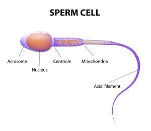Pre-fertilization