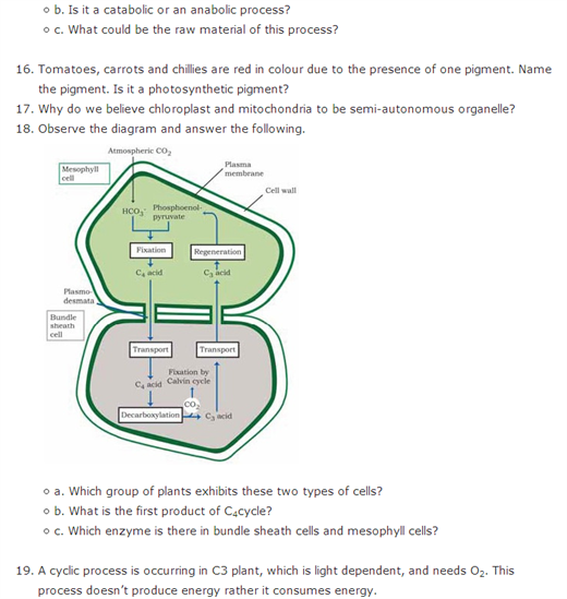 Important Questions Class 11 Biology Chapter 13 Photosynthesis Higher Plants Part 4