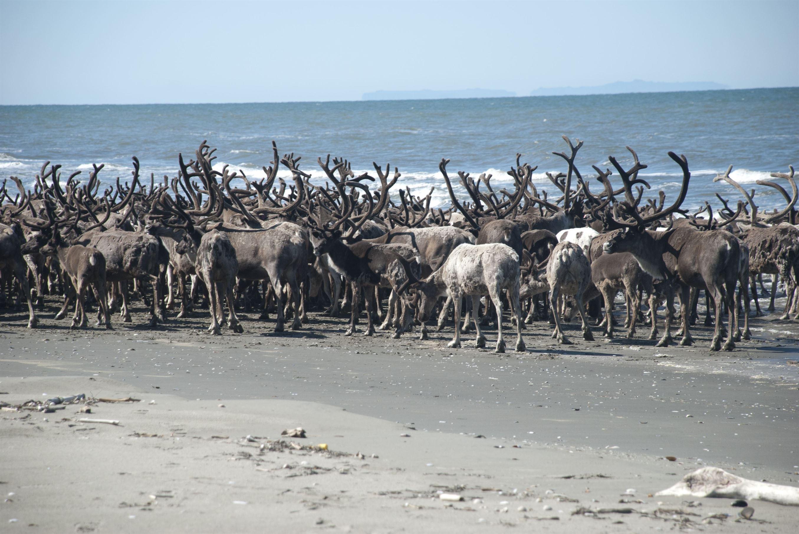 Animal-migration