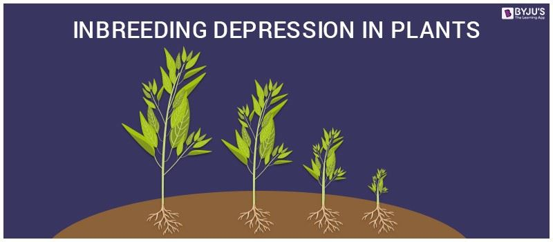 Inbreeding depression in Plants