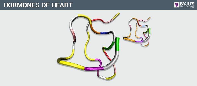 Hormones of Heart