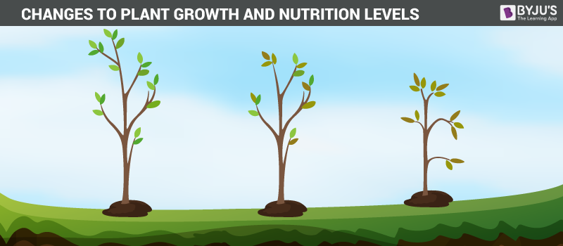 Effects on plant growth and nutrition levels