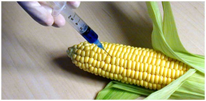 Genetically modified crops (GMO)