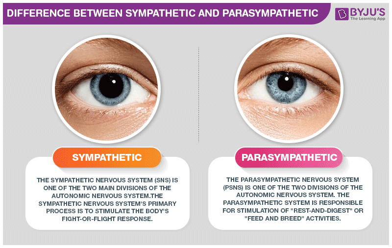 Difference Between Sympathetic And Parasympathetic