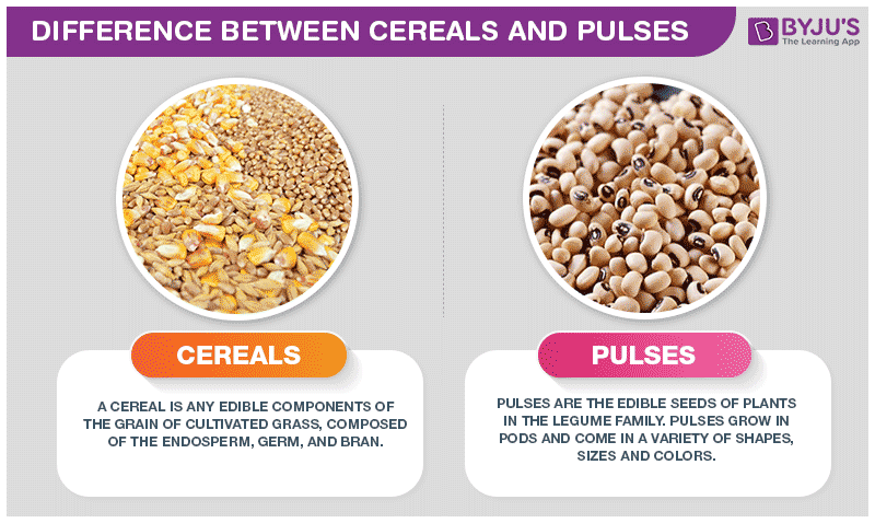 Difference Between Cereals and Pulses