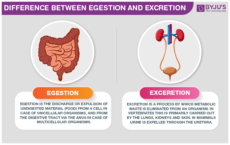 Difference Between Egestion And Excretion