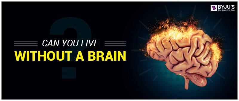 Can we live without a brain?