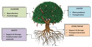 Plant & its parts