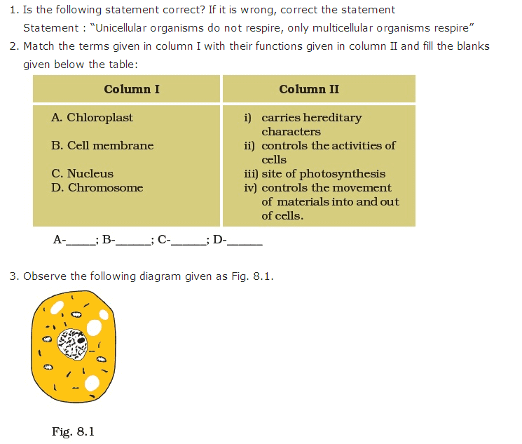 Important Questions For Class 8 Science Chapter 8 Cell