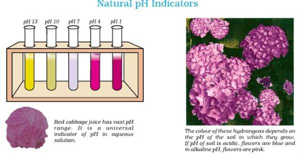 Chemistry practicals class11 image39