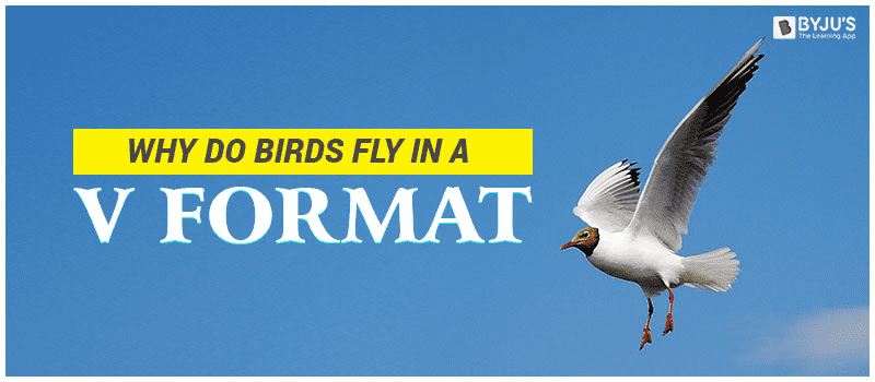 Why Do Birds Fly in a V
