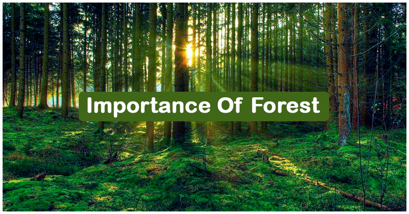 Importance-Of-Forest
