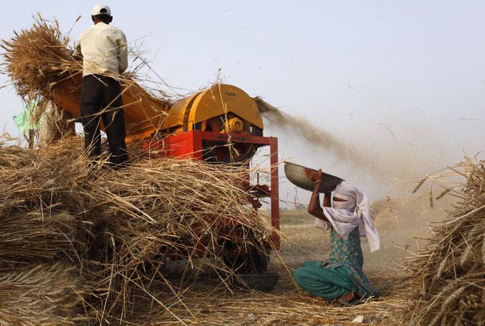 b_id_380572_wheat_harvesting_pics