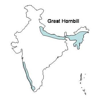 Great Hornbill In India